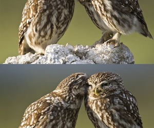 owl, love, and kiss image