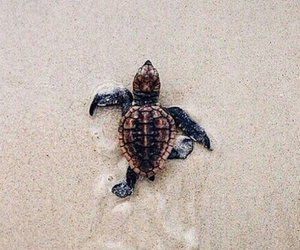 пляж, животные, and песок image