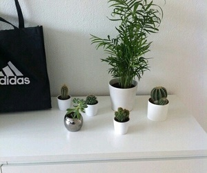 plants, adidas, and grunge image