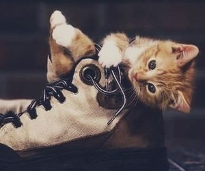 kitten and shoe image