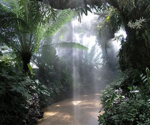 nature, green, and tropical image