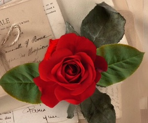 books, red rose, and romantic image
