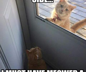 cat, funny, and hello image