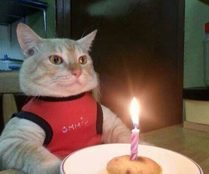 birthday, cat, and funny image