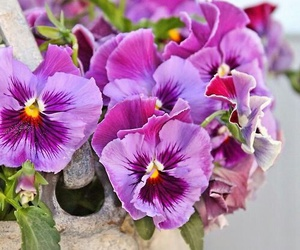 purple, flowers, and garden image