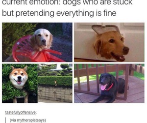 dog, emotions, and funny image