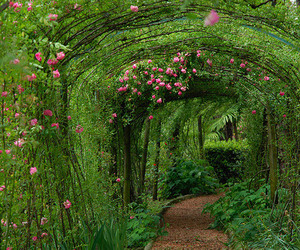 flowers, green, and garden image