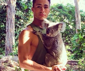 colton haynes, Koala, and teen wolf image