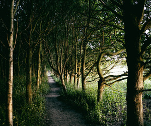 green, nature, and path image