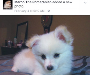 facebook, fluffy, and marco image