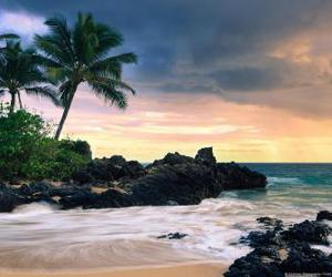 background, palm, and beach image