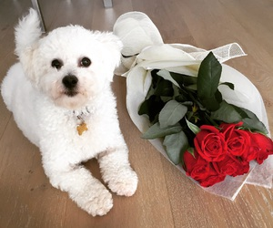 puppy, Valentine's Day, and cute image