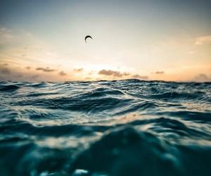 ocean, beach, and sky image