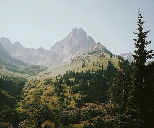 forest, landscape, and mountains image