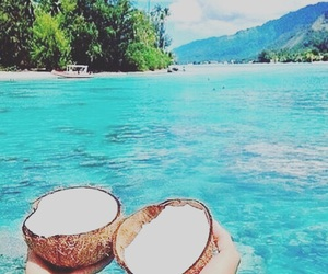 coconut and water image