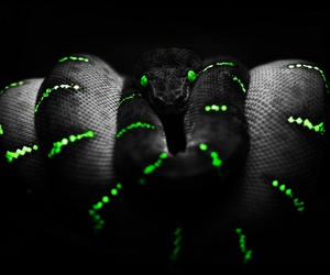 black, green, and snake image