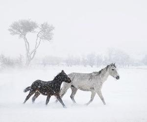 fashion, horse, and nature image