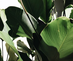 green, plants, and nature image