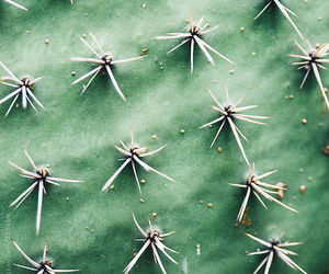 cactus, plants, and summer image