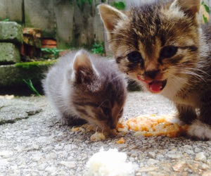 cats, food, and love image