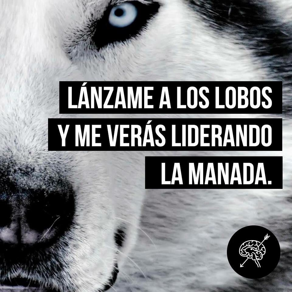 Image About Lobos In Frasesitas By Magdalena Jofre Vega