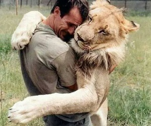 lion, cute, and freanship image