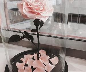 beautiful and pink rose image