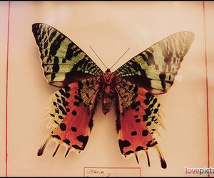 photography, butterfly, and pretty image