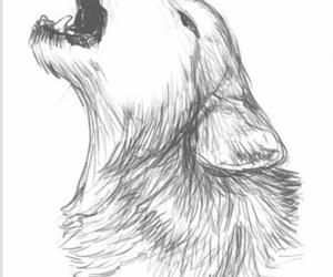 wolf, drawing, and animal image