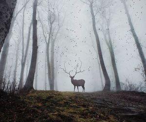 dark, foggy, and deer image