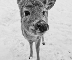 adorable, bw, and snow image