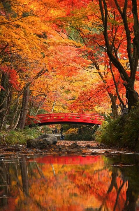 japan, yellow, and red image