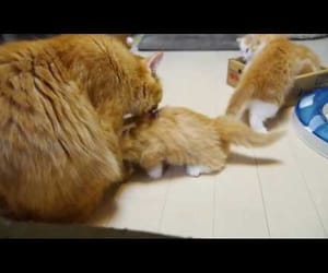 video, cute, and cats image