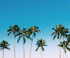 palms, summer, and teenager image