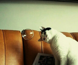 bubble, cute, and cat image