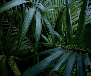 green, plants, and theme image