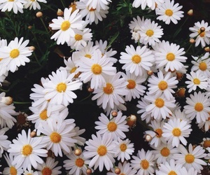 flowers, white, and love image