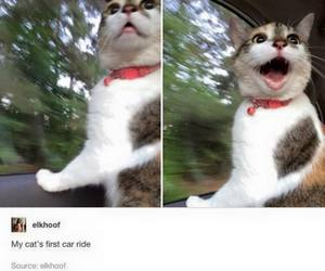 cat, car, and funny image