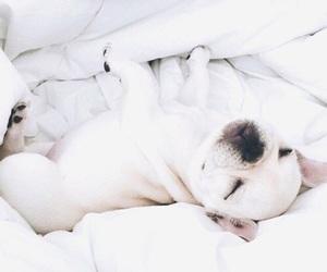 white, dog, and animal image