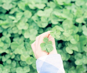 clover and green image
