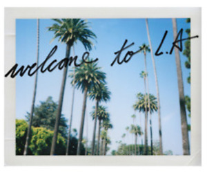 palm trees and l.a image