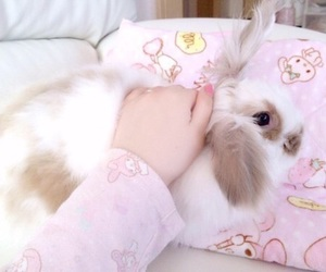 pink, bunny, and rabbit image