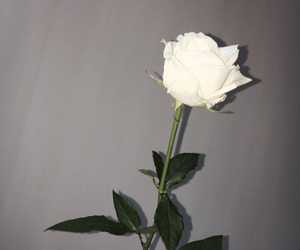 grunge, pretty, and white image