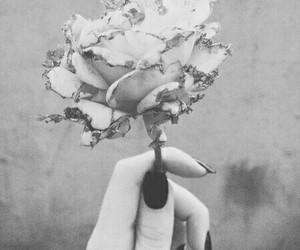 black and white, monochrome, and blackandwhite image
