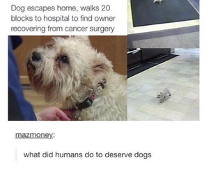 amazing, beautiful, and dogs image