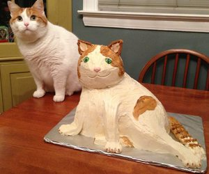 cat and cake image