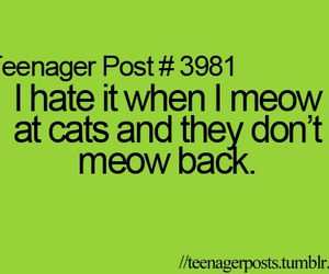 cat, meow, and teenager post image