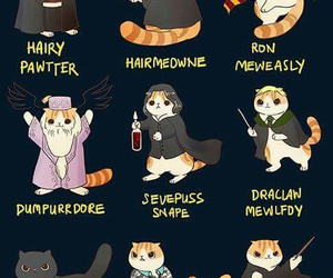 cat, harry potter, and funny image
