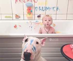 bull terrier and funny image