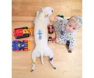 bull terrier, funny, and toys image